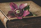 大鱼海棠经典台词